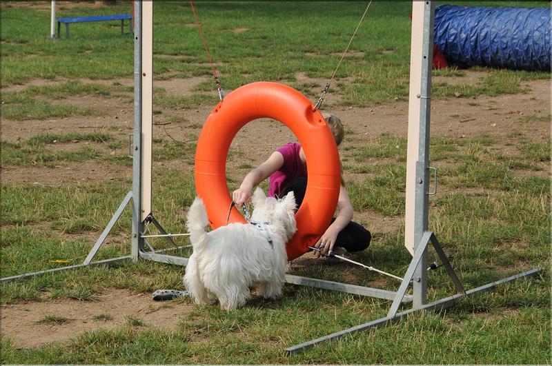 dressage chien thionville